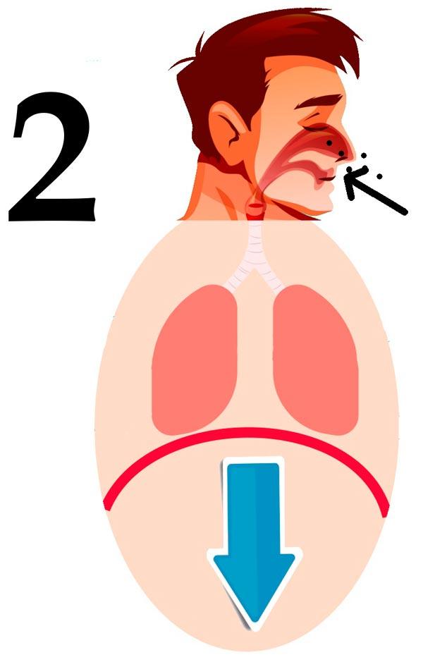 fase 2 de la respiración