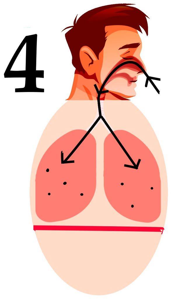 fase 4 de la respiración